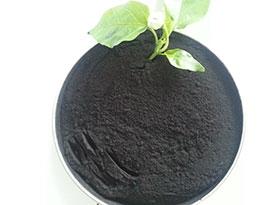 埃及50%腐植酸粉末